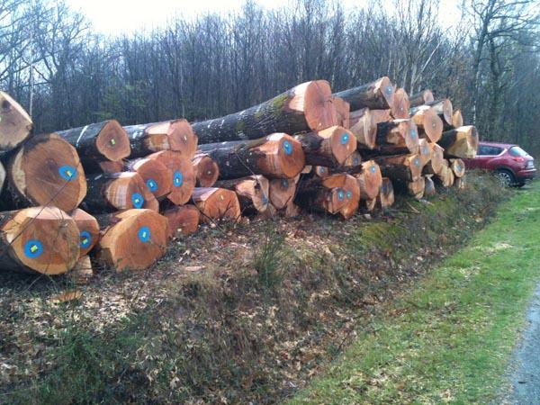 Case Di Tronchi Americane : Acquisto tronchi quercia rossa americana affarilegno.it