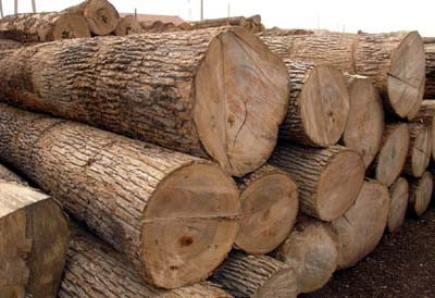 Nonostante il divieto il legname continuano ad attraversare il confine