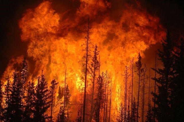Brunell - I grandi incendi aumentano i prezzi del legname in America