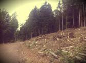 Ingenti danni alle aree forestali italiane