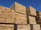 Una segheria austriaca sta valutando se acquistare del legname caduto in Alto Adige