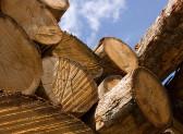 Prezzi del legno in calo del 30 per cento - 14 milioni di alberi sono a terra